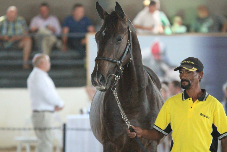 RIVERTON OFFER FABULOUS FIVE AT CAPE YEARLING SALE