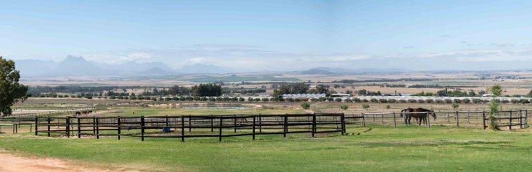 SORRENTO OFFERS STELLAR DRAFT AT CAPE YEARLING SALE