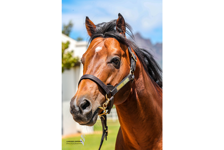 Read more about the article CAPE YEARLING SALE CATALOGUE NOW ONLINE