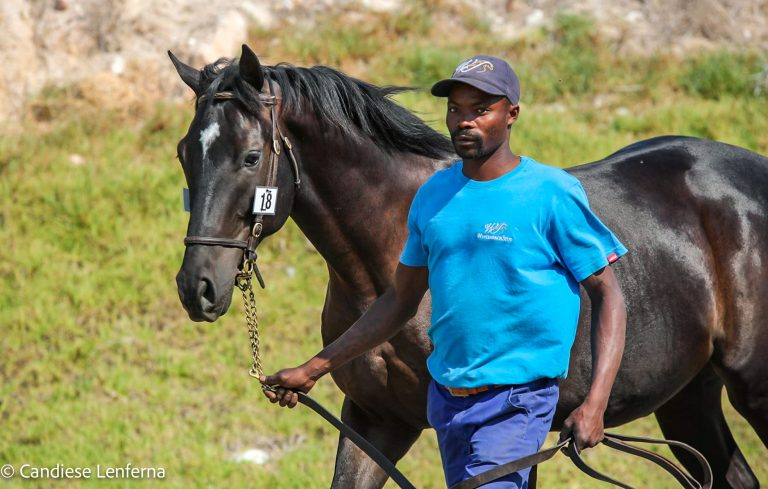 Read more about the article WINTERBACH STUD WELL REPRESENTED AT CAPE SALE