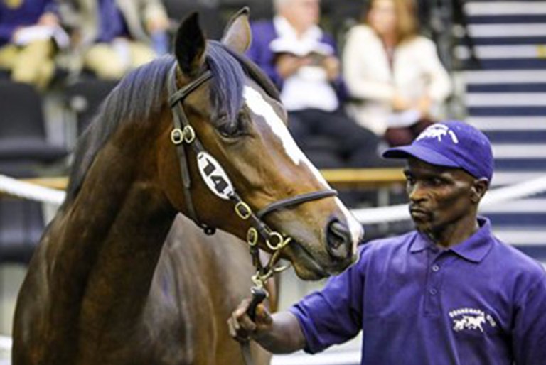Read more about the article EXCITING SIRES DOMINATE CONNEMARA'S CAPE DRAFT