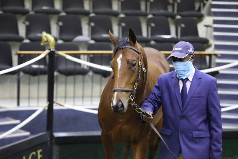 DRAKENSTEIN TO OFFER CLASSY COLTS AT CAPE YEARLING SALE