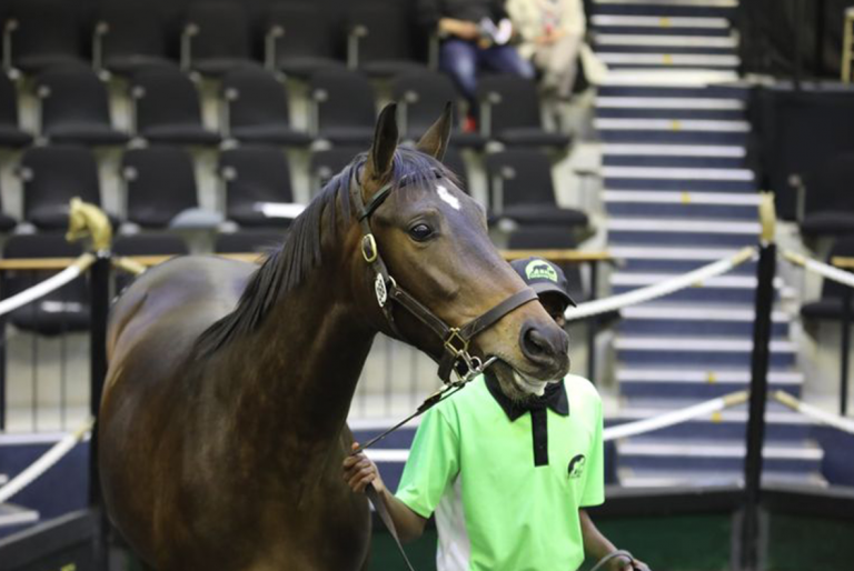 PROVEN SIRES DOMINATE EVERGREEN'S CAPE SALE DRAFT