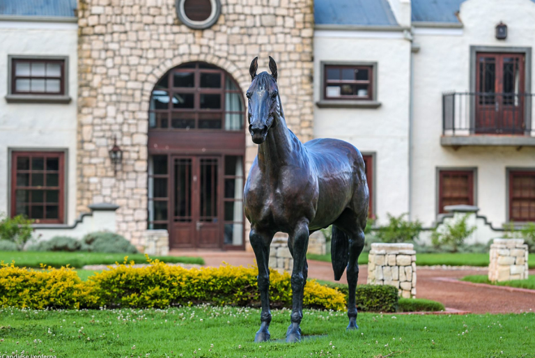 KLAWERVLEI STUD OFFER A QUALITY DRAFT AT THE CAPE YEARLING SALE