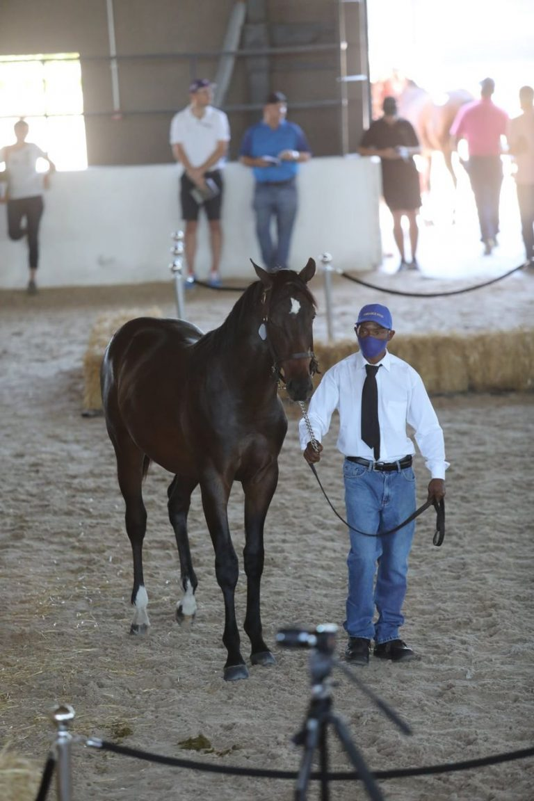 Read more about the article AMBIANCE STUD ABLY REPRESENTED NATIONAL SALE