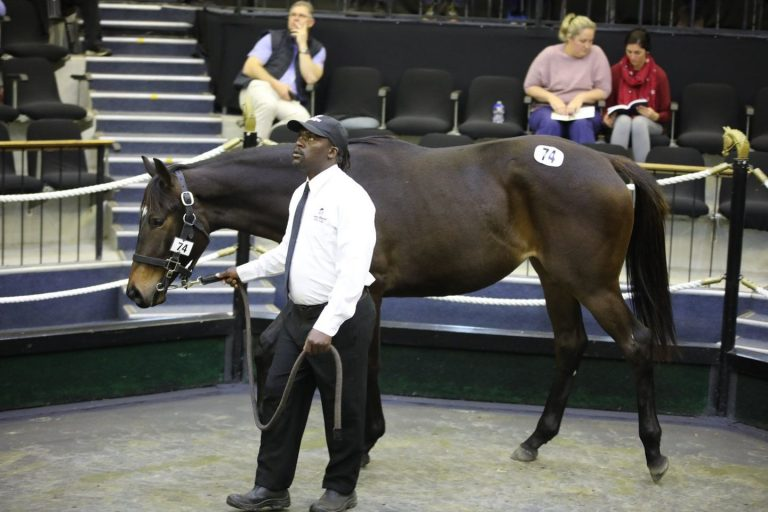 BIG SKY RANCH TO SOAR AT NATIONAL YEARLING SALE