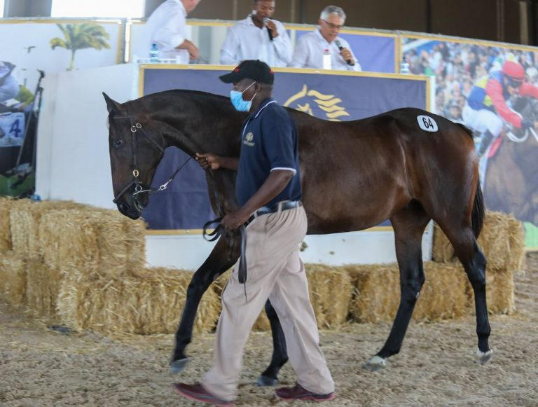 VERCINGETORIX COLT TOPS CAPE YEARLING SALE