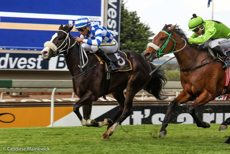 DIGTEBY TO OFFER WELL BRED POMODORO FILLIES AT NATIONAL SALE