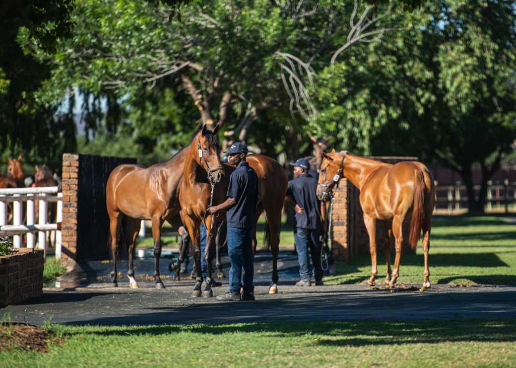 Read more about the article AUGUST 2YO SALE CATALOGUE NOW ONLINE