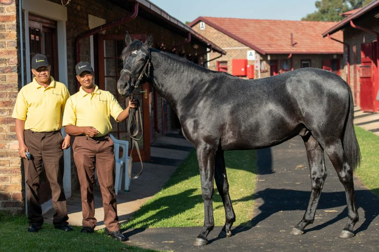 Read more about the article OLDLANDS STUD OFFER CLASSY AUGUST SALE DRAFT