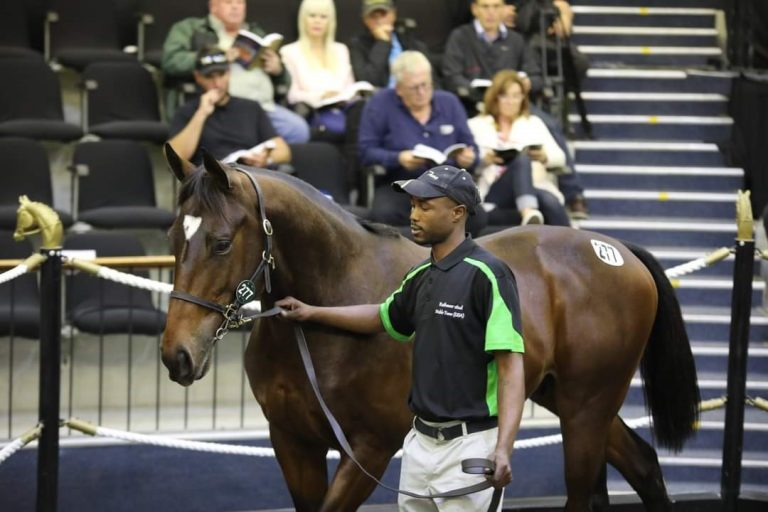 Read more about the article RATHMOR OFFER FIVE AT AUGUST SALE