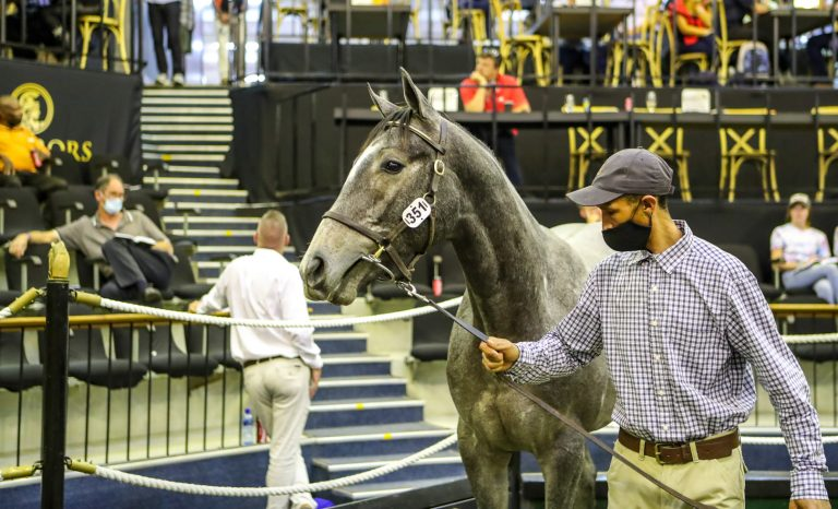 Read more about the article GIMMETHEGREENLIGHT COLT TOPS NATIONAL YEARLING SALE