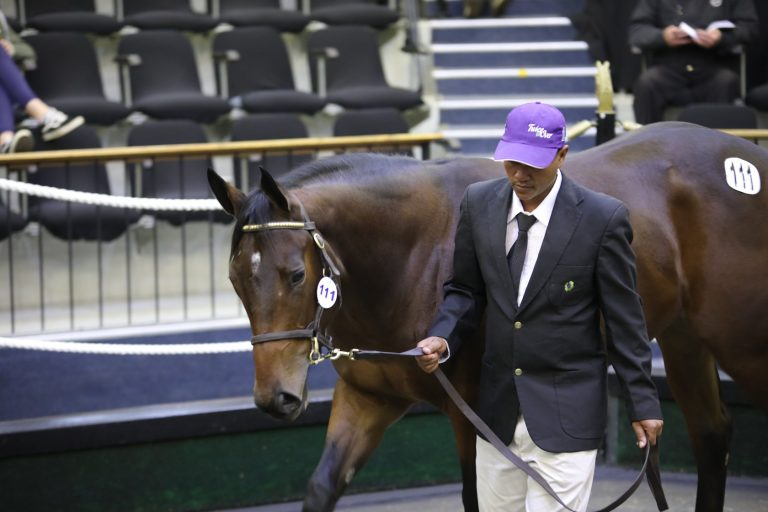 CHAMPION BREEDERS TO OFFER A CHAMPION DRAFT AT NATIONAL SALE