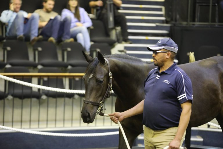 Read more about the article LA BERG STUD OFFER THREE TOP PROSPECTS AT NATIONAL SALE