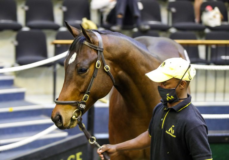 MAURITZFONTEIN TO OFFER MAGNIFICENT NATIONAL SALE DRAFT