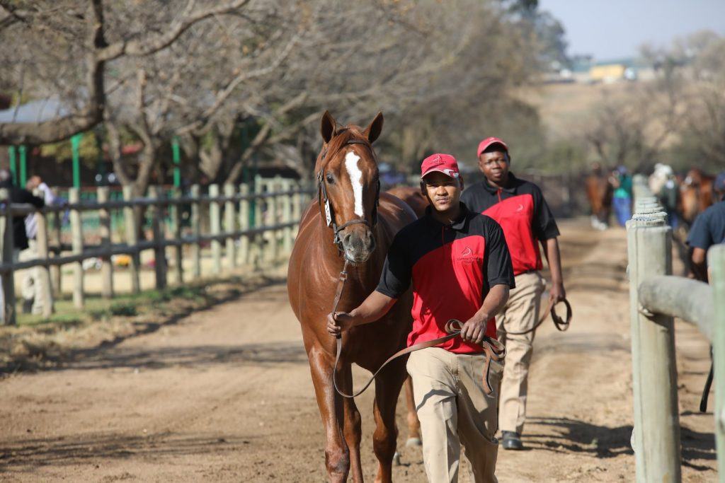 NARROW CREEK STUD WELL REPRESENTED AT NATIONAL SALE