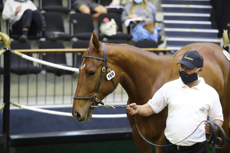 OLDLANDS STUD OFFER CLASSY COLTS AT NATIONAL SALE