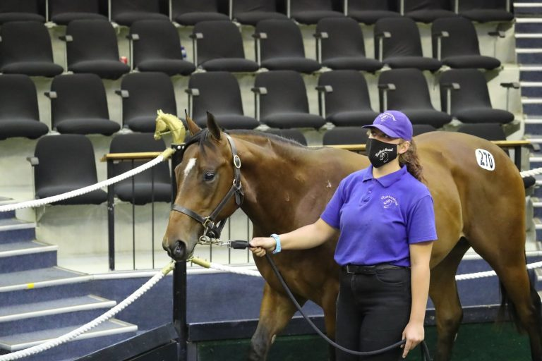 RIETHUISKRAAL OFFER SMART DRAFT AT NATIONAL SALE